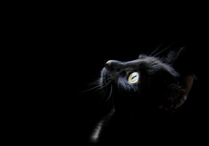 Интересно: факты о чёрном цвете