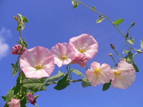 Доброе утро! Красочно-цветочного настроения!