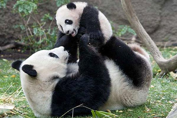 Странные мамаши животного мира ...
