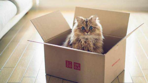 О гнездовании кошек...