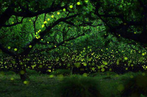 Есть свет - значит есть жизнь!