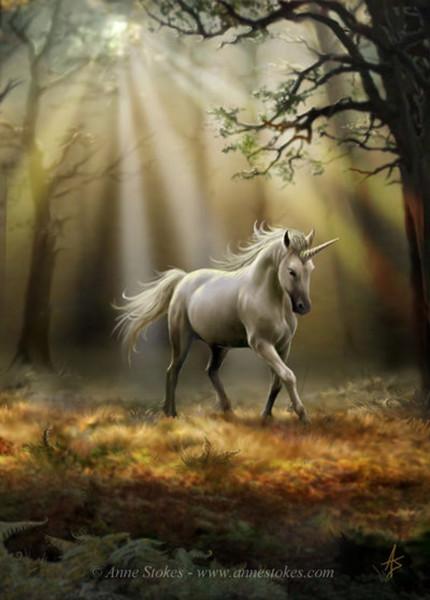 Единорог - чудо или реальное существо из дремучего леса?
