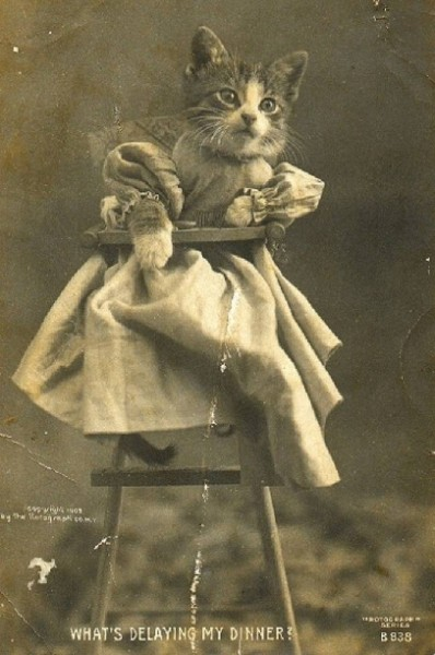 Зверята на фото из прошлого века