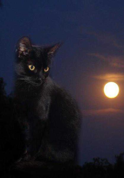 Доброй ночи! Пушистых снов!