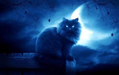 Доброй ночи! Мурчащих снов!