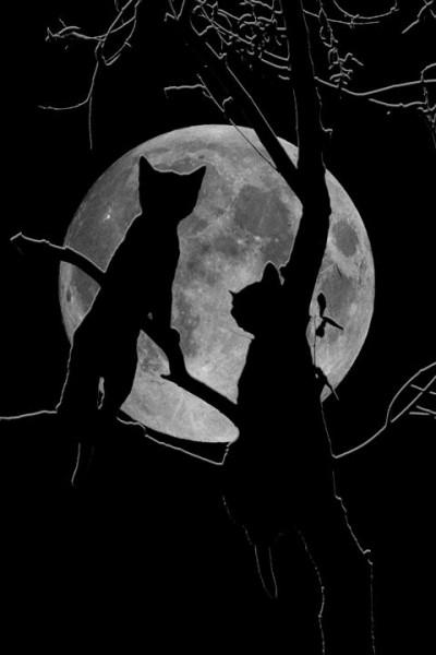 Кошка и Луна. Символизм и мифы.
