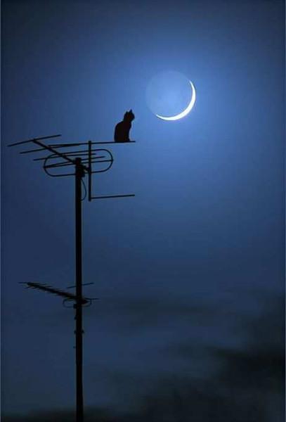 Доброй ночи! Волшебных снов!