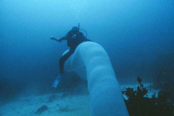 Редкий гигант океанских глубин