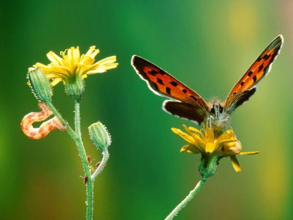 Пять гусениц и бабочка