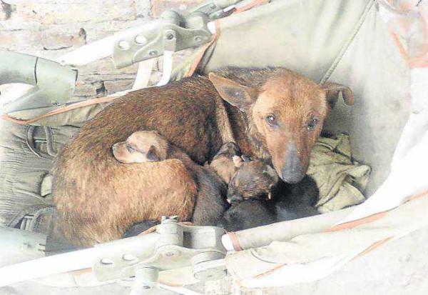 Добросердечная собака спасла младенца, выброшенного матерью (человеком?...)...