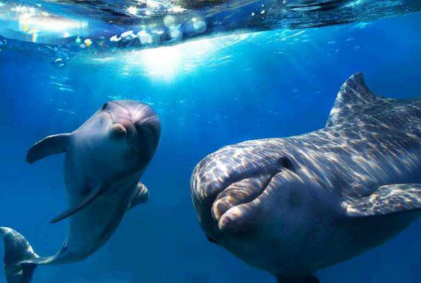 Дельфины признаны личностями в Индии