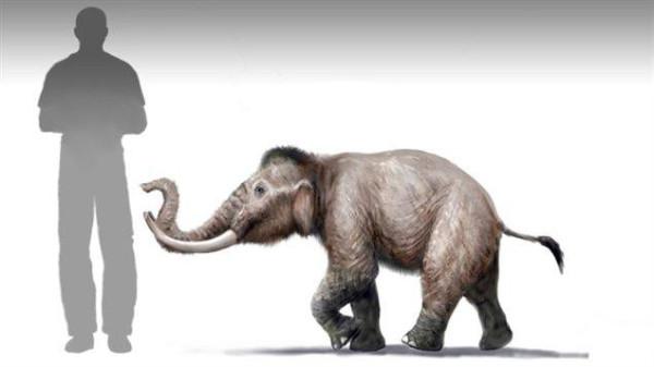 Мини-мамонты