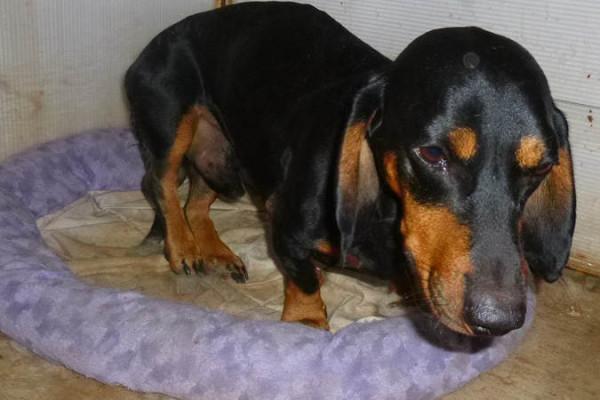 Собаку спасли от последствий бесчеловечности...