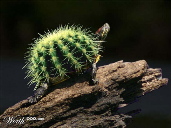 Необычные  животные... или растения?...