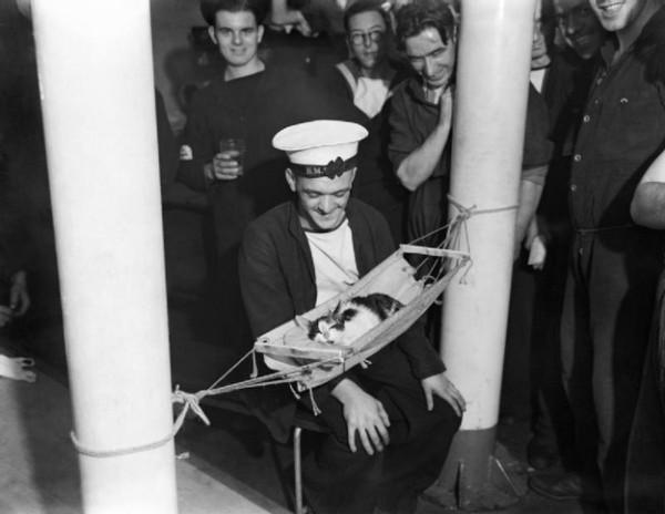 Корабельный кот - почётная должность!