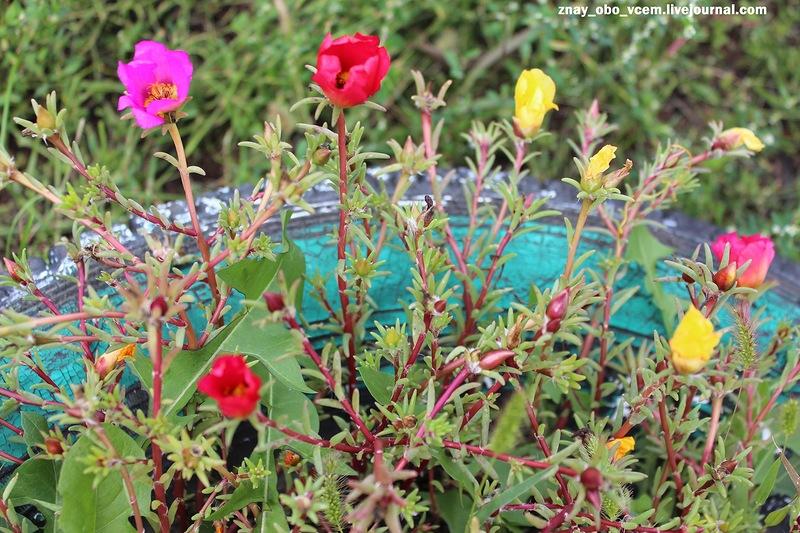 Весёлые цветочки для солнечного настроения!