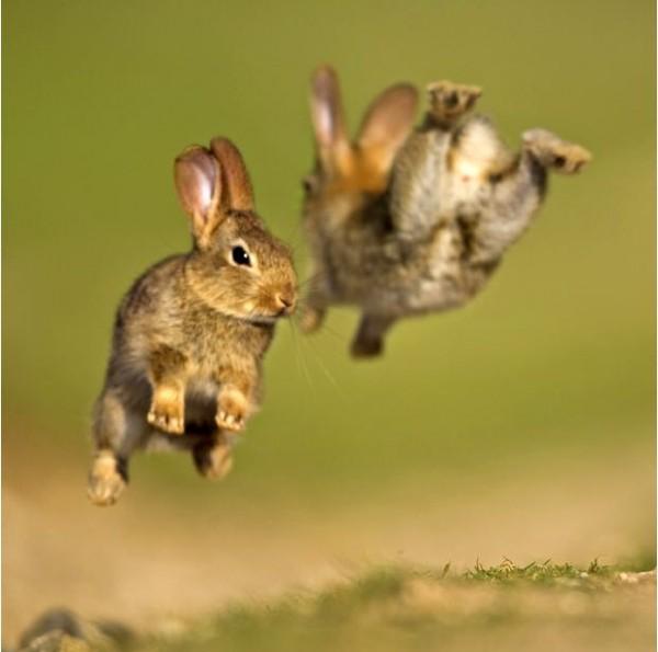 Сегодня - Всемирный день животных!