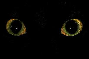 Глаза - каждому для своих, особых целей...