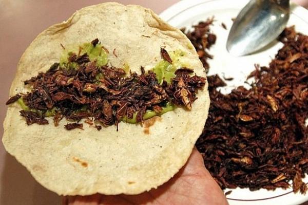 NEXT-обед : зеленая тина, насекомые и компот