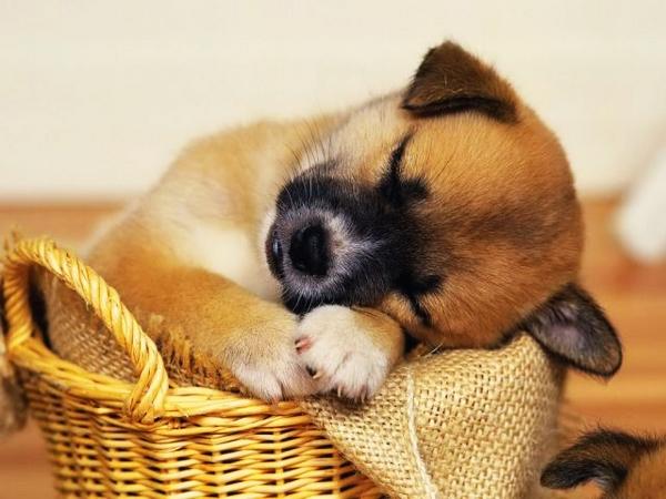 Доброй ночи! Безмятежных снов!