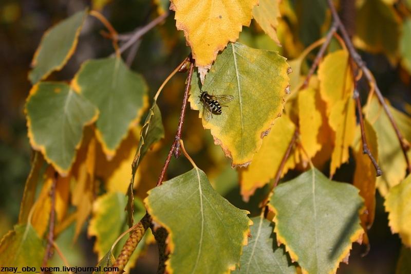 Осенняя муха, жар-птица и зелёные ноябрьские листочки