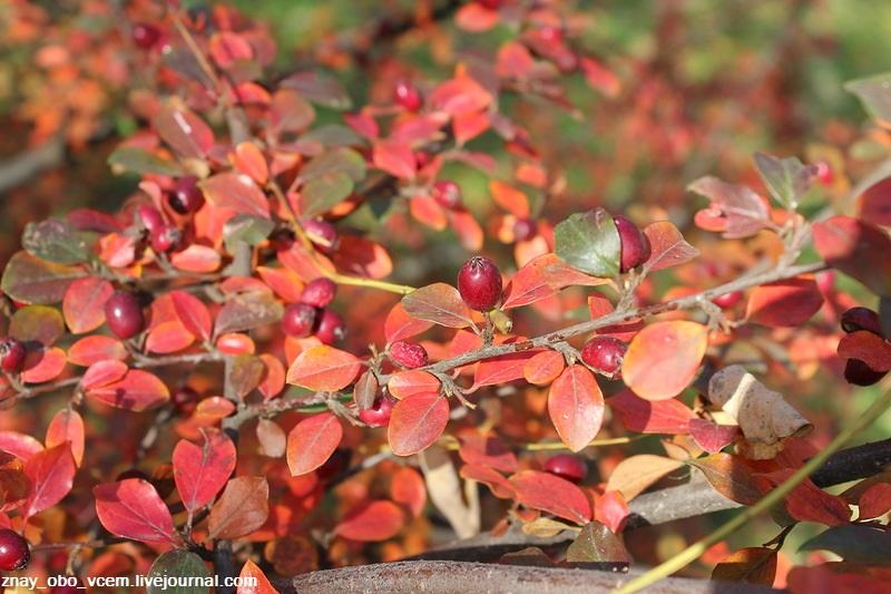 Весёлые цвета осени