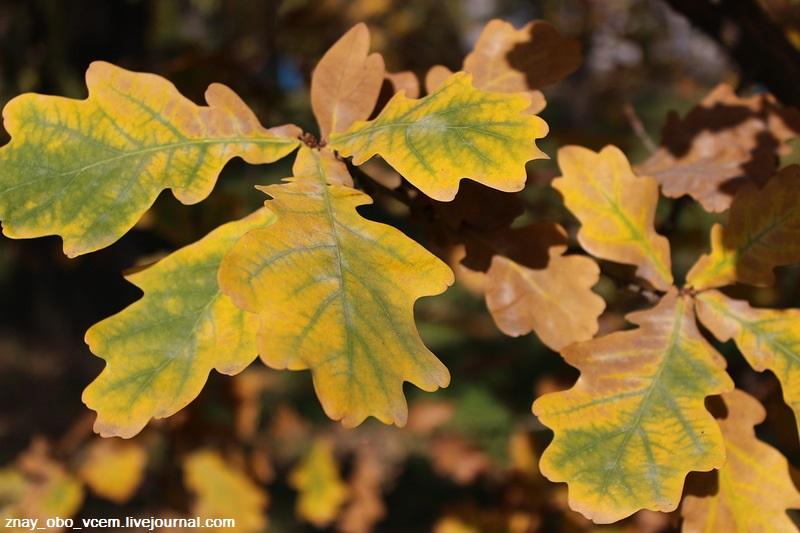 Осень... в увядании таится новая жизнь...