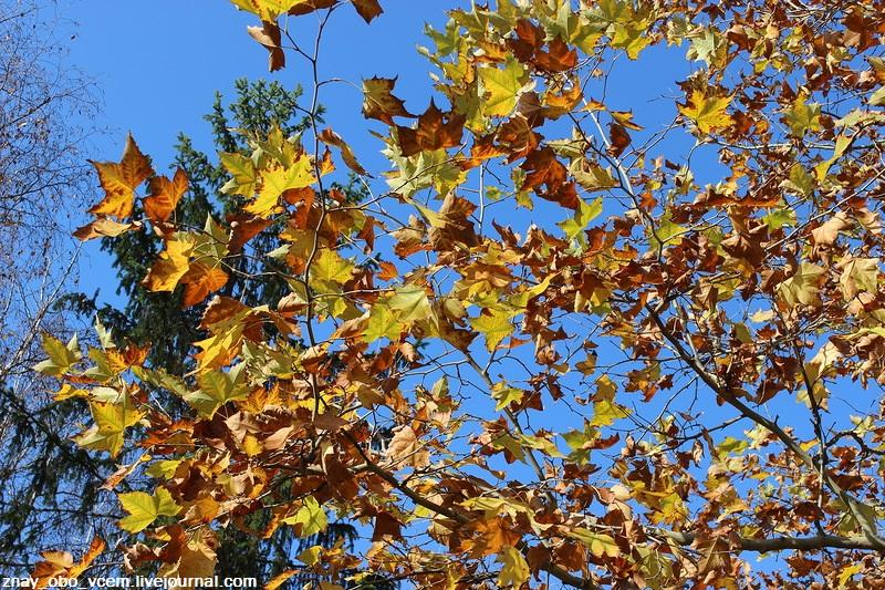 Осень и жизнь
