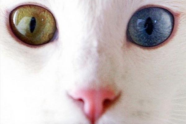 Водоплавающие кошки