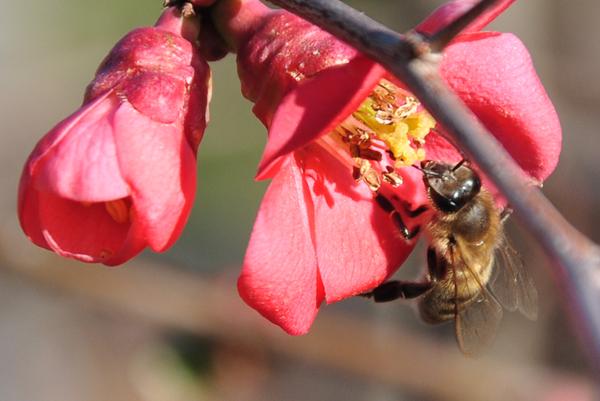 Пчёлы - природные диагностики