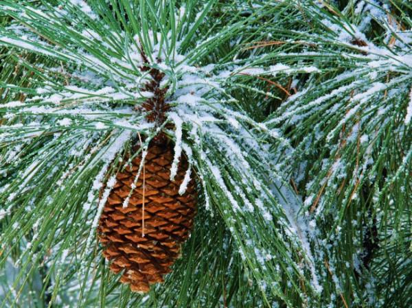 Доброе утро! Желаю всем красивой, настоящей зимы!