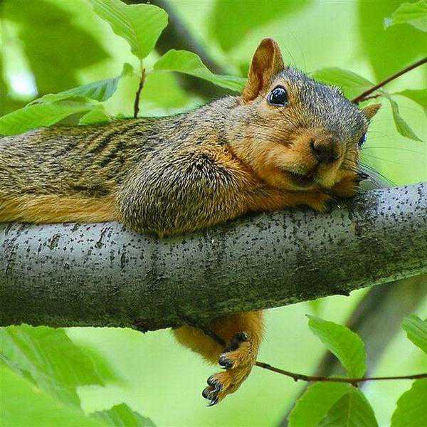 Доброе утро! Желаю всем приятного, уютного понедельника!