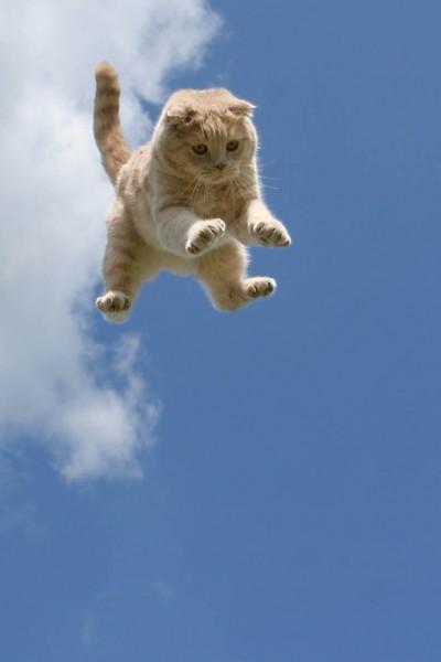 Задача о падающей кошке  классная физика