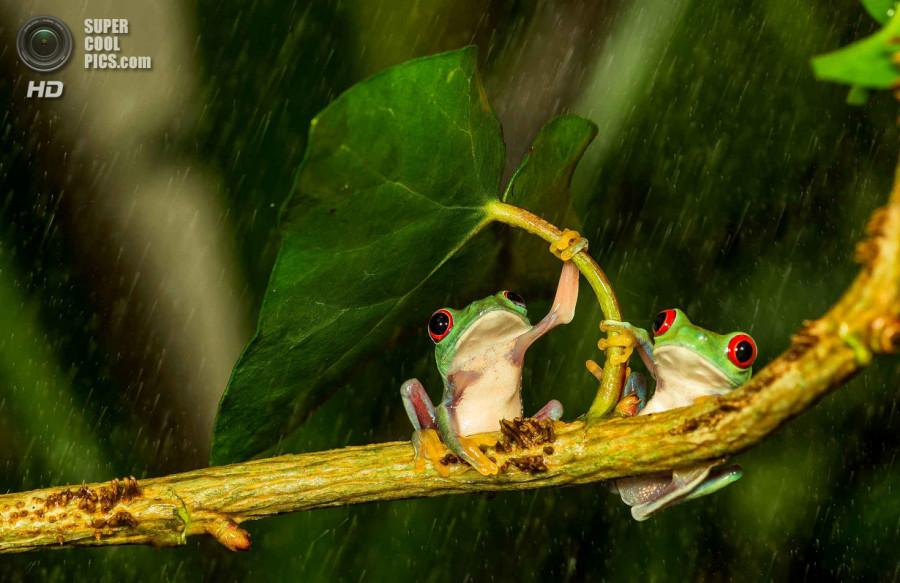 Романтично-забавные лягушата