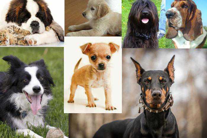 Ваша личность и порода вашей собаки