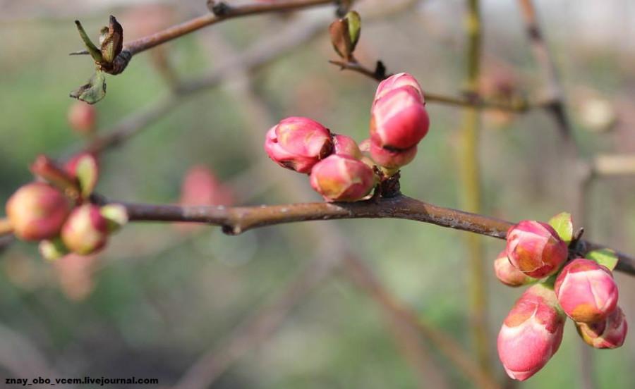 Весна пришла! Желаю всем тепла, солнышка, радости, вдохновения, любви!