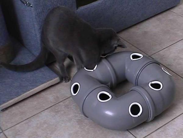 Чем бы кошка ни тешилась...