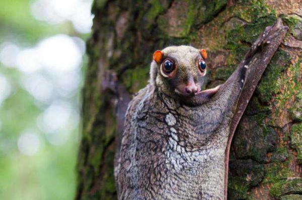 Животные странные, необычные, симпатичные и не очень...