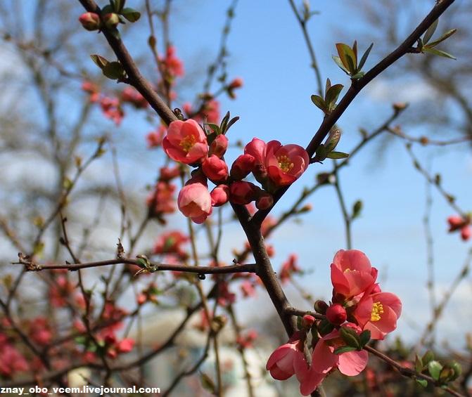 Доброе утро! Пусть предчувствие расцвета природы подарит вам прекрасное настроение!