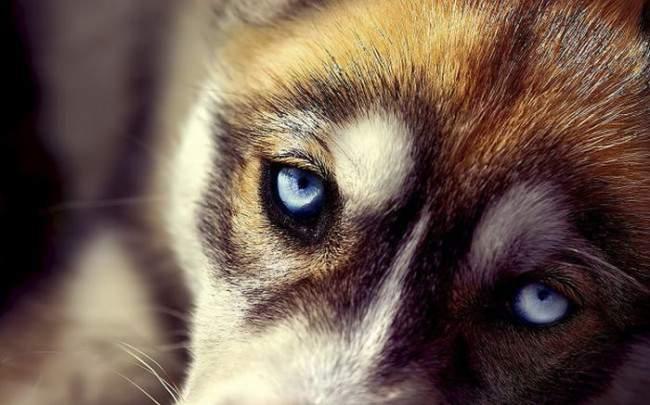 Собаки - друзья и экстрасенсы