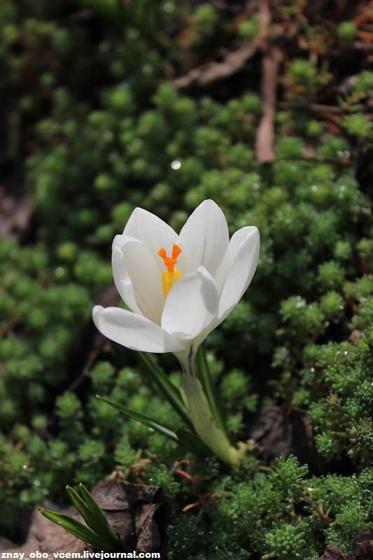 Весна празднует: первые цветы