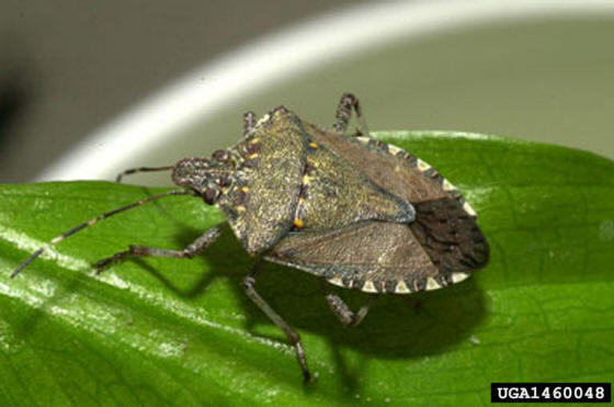 Меню из насекомых - пока знакомимся, скоро будем использовать в питании?