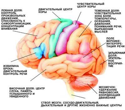 Как сохранить гибкий и ясный ум, острый интеллект и превосходную память.