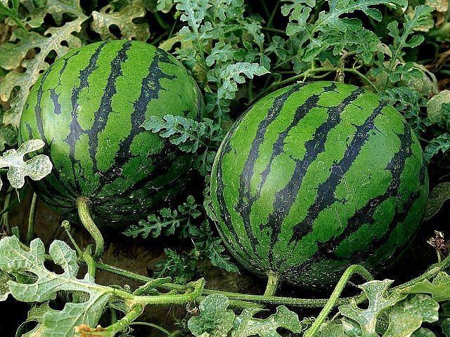 Маленькие секреты больших урожаев.Советы огороднкам)