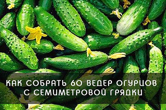 Маленькие секреты больших урожаев.Советы огороднкам