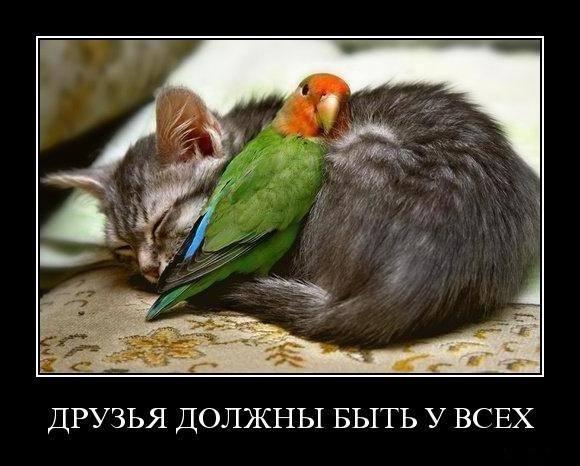 Друзья должны быть у всех