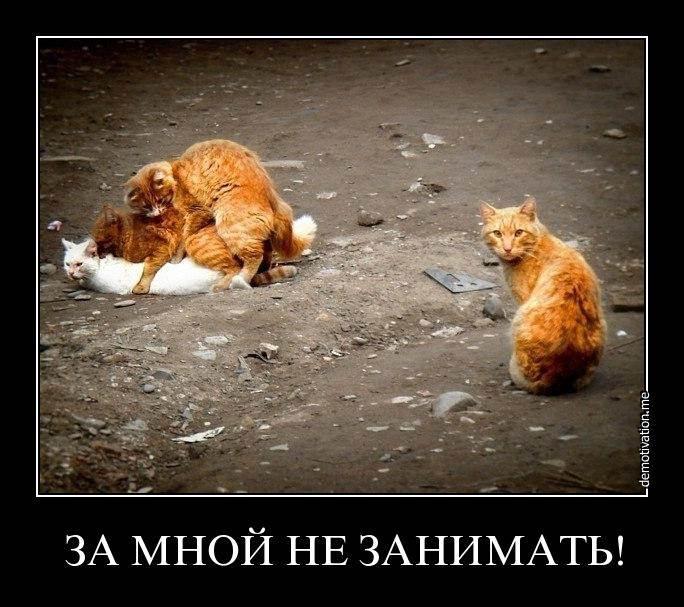 Тайны хорошего настроения. Коты зажигают