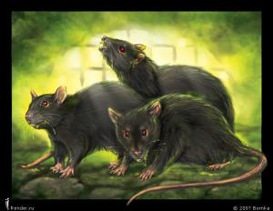 Всё началось с крыс...