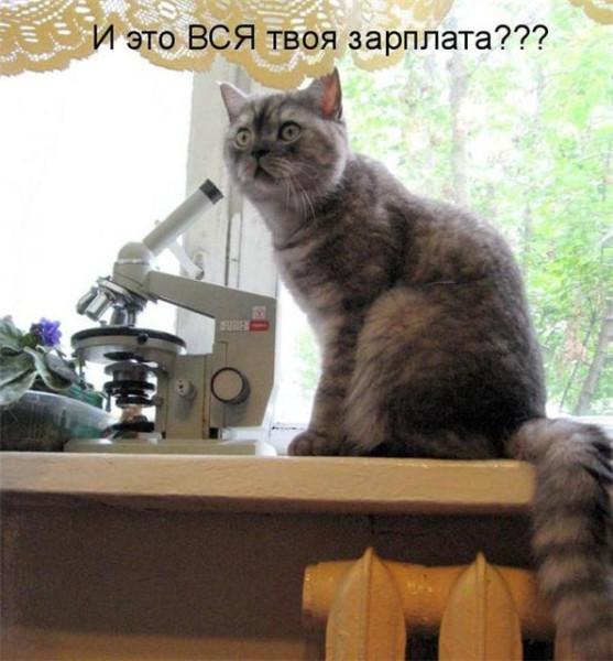 Эх, котэ....