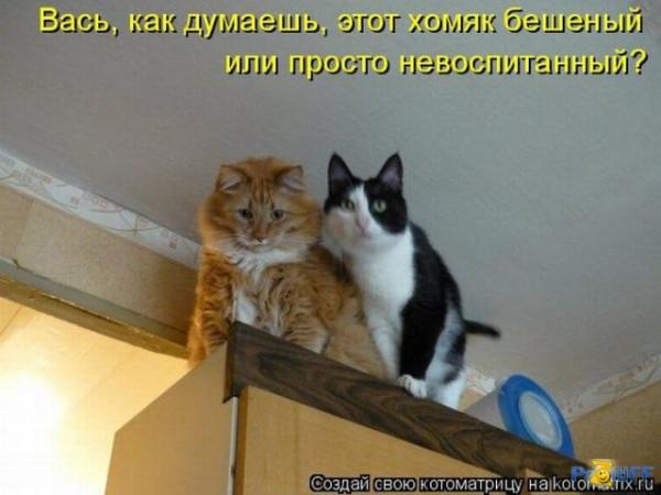 Улыбнись. Коты в ужасе!